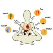 Elemente in den Organen