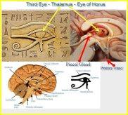 Zirbeldrüse - Dritte Auge